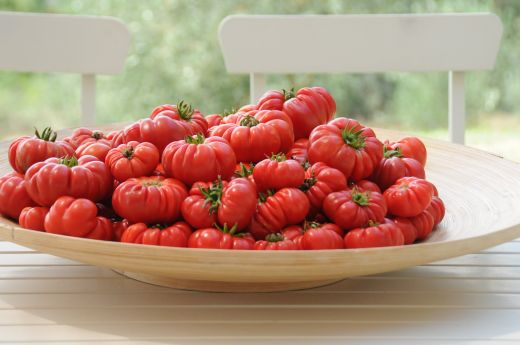 Image of a bowl of Heritage Tomatoes on a white table with white chairs and countryside green arable landscape background