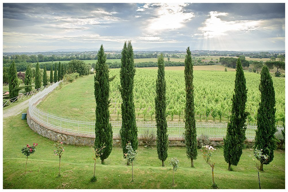 Image showing a tuscan country house garden and the vineyards beyond. image of tuscany in june showing bright green grass and rich green cypress trees a row of rose bushes in bloom in the foreground in midground a wall with an iron fence beyond the vineyard the blue grey skies and gently undulating land of the val di chiana