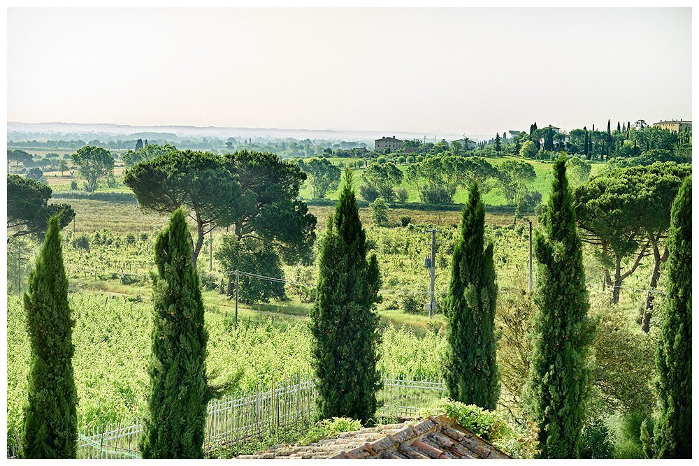 Image showing views from Siena House boutique hotel in Tuscany picture from june showing intense greens in the vines and wheat fields